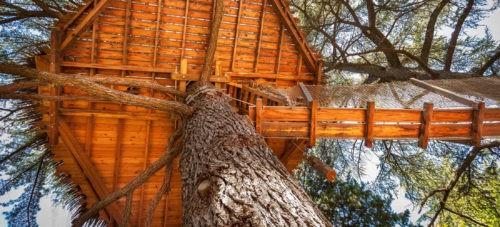 Photo - Oenotourisme - cabane dans les arbres - Grand Duc - nature - Domaine de l'Arbousier