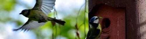 Photo - Nichoir - oiseaux - démarche bio
