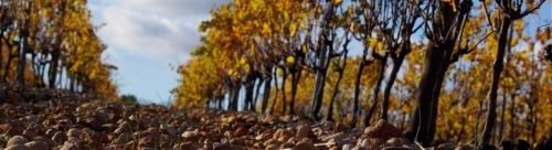 Photo - terroir - terre et pierre - sol - vignes automne
