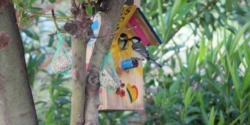 Photo - Nichoir La Cabane de l'Arbousier - oiseaux - messange