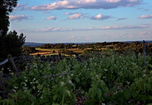 Photo - vignes - terroir - escapades vigneronnes